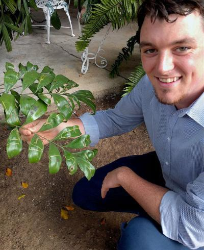 Nathan Jud shows a cycad with damage from leaf-mining flies.