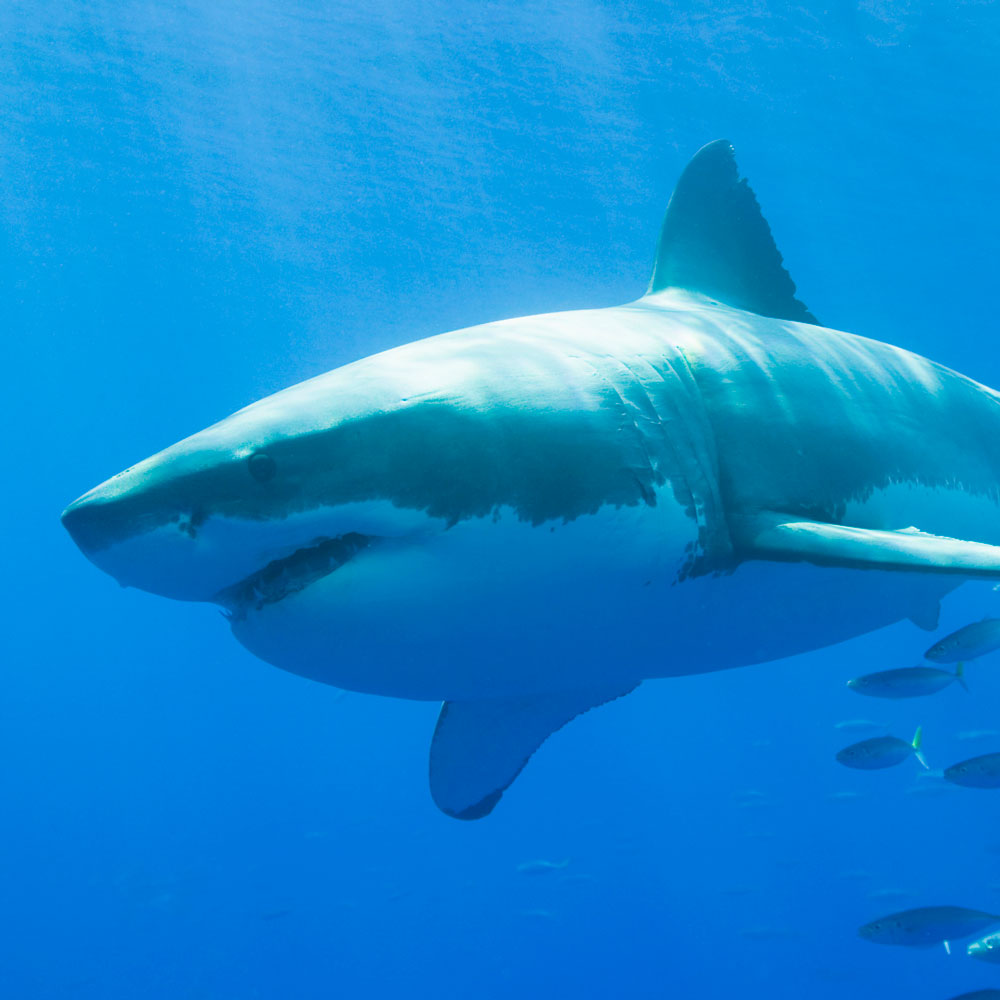 02 shark attacks hit all time high in 2015 university of