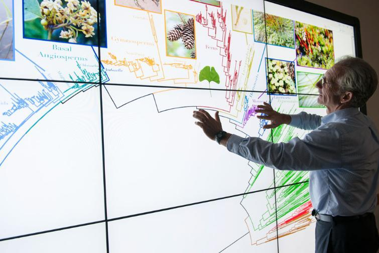 UF biologist Doug Soltis uses the Tree of Life, a map of all named species.