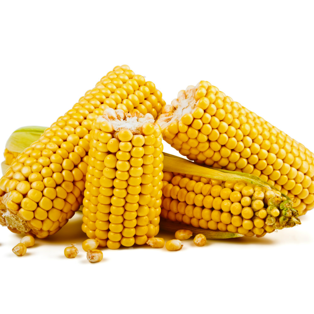 How a kernel of corn may yield answers into some cancers