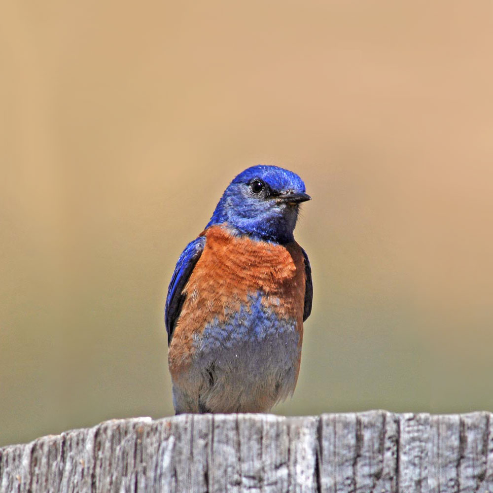 Noise pollution causes chronic stress in birds, with health