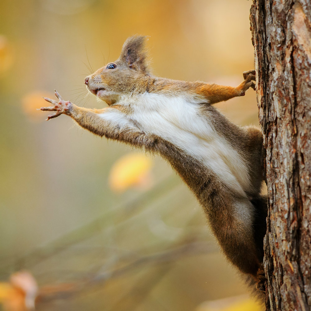 Why should you love squirrels? Here are six reasons - News