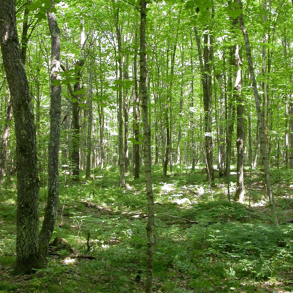 Drought-induced changes in forest composition amplify effects of climate change on carbon storage