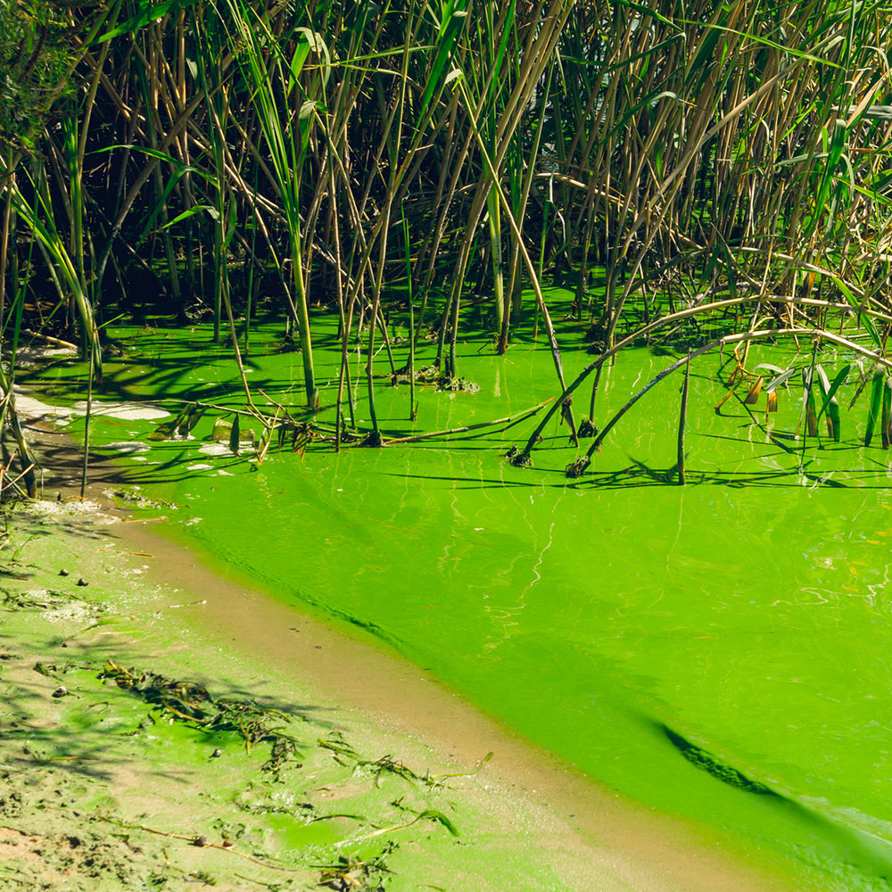 08 What Is Causing Florida S Algae Crisis 5 Questions Answered
