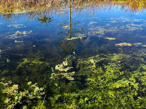UF public perception survey shows high level of concern over algal blooms in Florida waters
