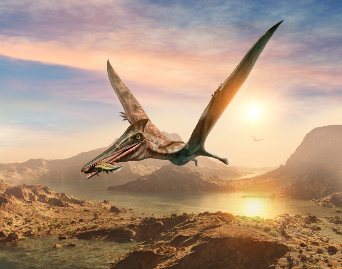 an illustration of a flying pterosaur