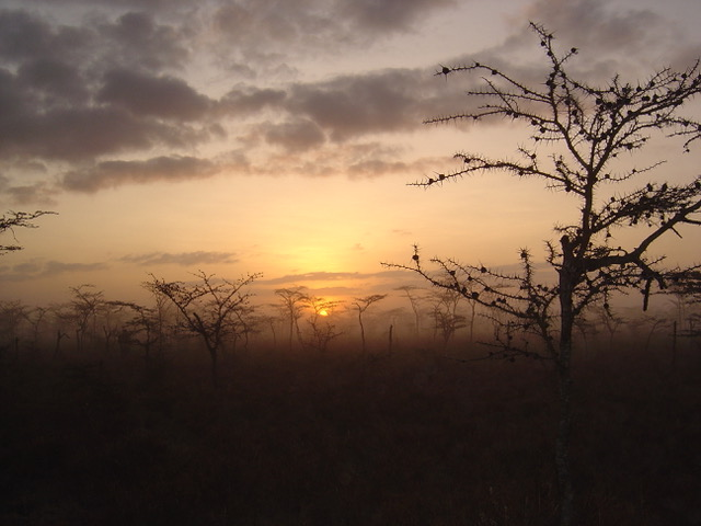 Temperatures in the African savanna affect ant/plant mutualism