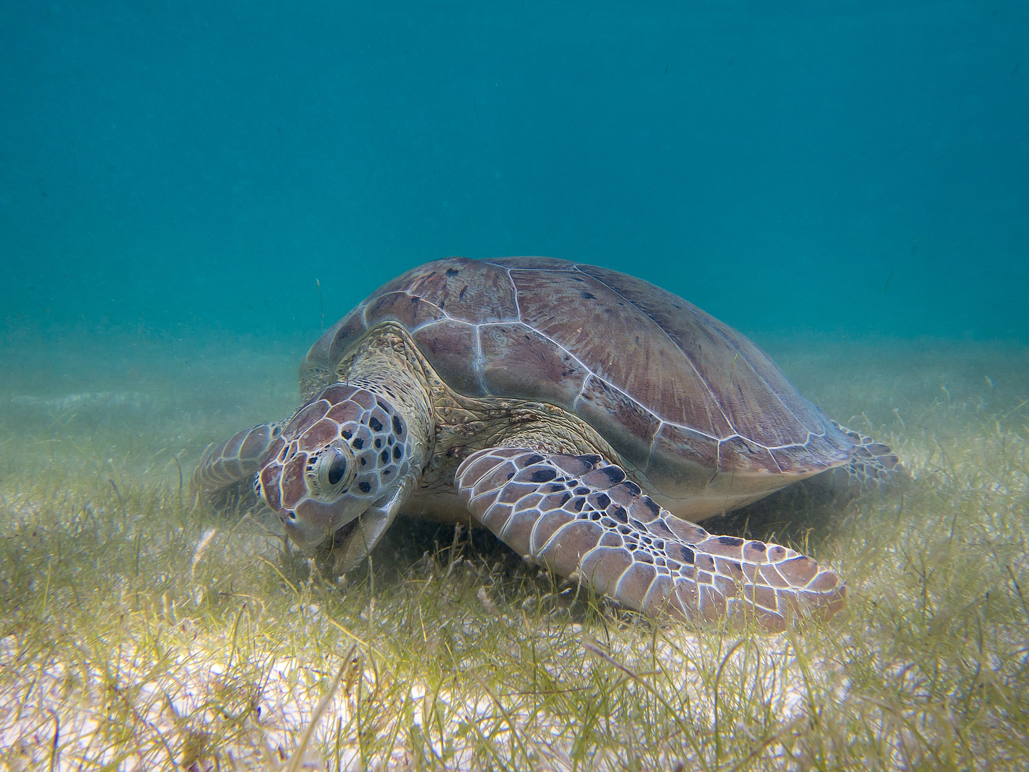 Seagrass meadows harbor wildlife for centuries, highlighting need for conservation