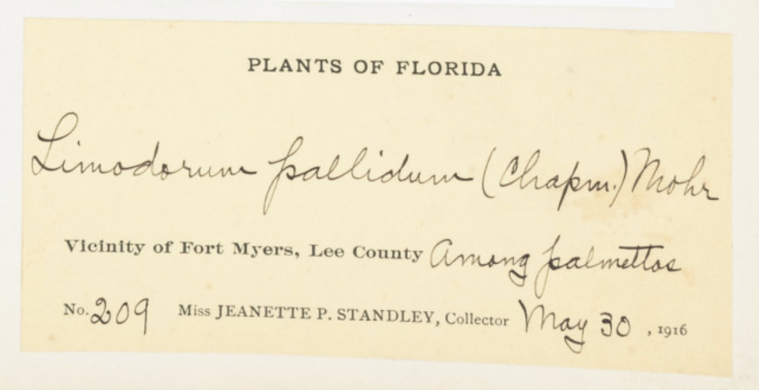 handwriting describes where a butterfly was found in Ft Myers in 1916
