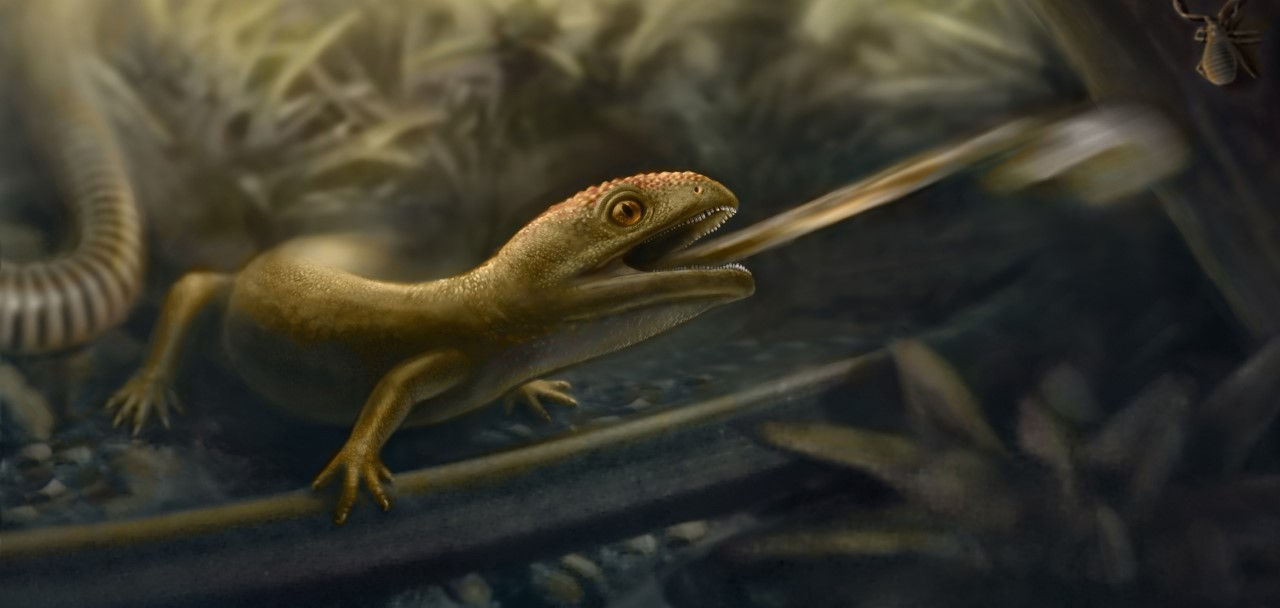 Earliest example of a rapid-fire tongue found in 'weird and wonderful' extinct amphibians