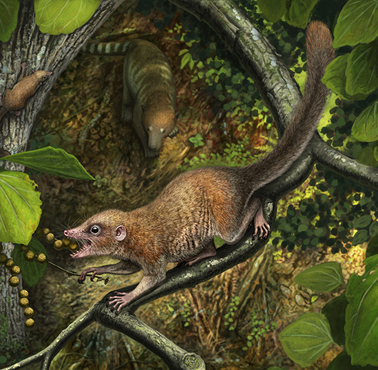 UF researcher helps confirm ancient primates once walked with dinosaurs
