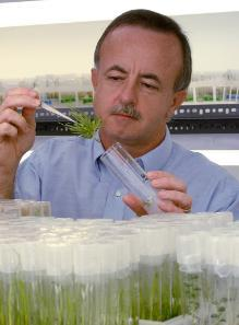 In this file photo, Mike Kane, a professor of environmental horticulture at the University of Florida's Institute of Food and Agricultural Sciences, inspects sea oats grown in a test tube.